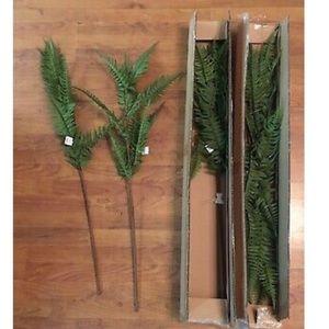 New Threshold Display fern stems